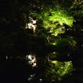 旧古河庭園ライトアップ 日本庭園(2)