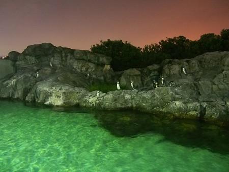 20140813 葛西 夜のペンギンプール07