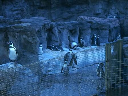 20140813 葛西 夜のペンギンプール03