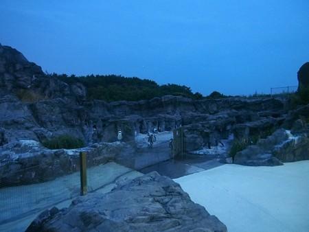 20140813 葛西 夜のペンギンプール02