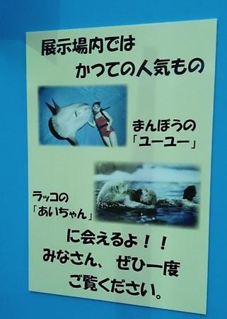 20140809 松島 マリンピア05