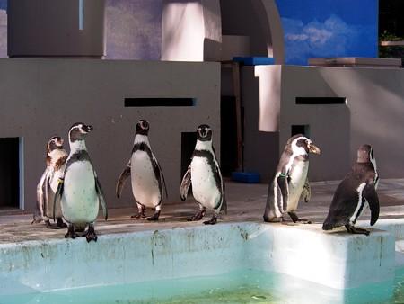 20140823 野毛山 ペンギンプール02