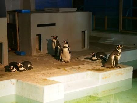 20140823 野毛山 夜のペンギンプール15
