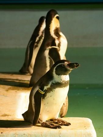 20140823 野毛山 夜のペンギンプール11
