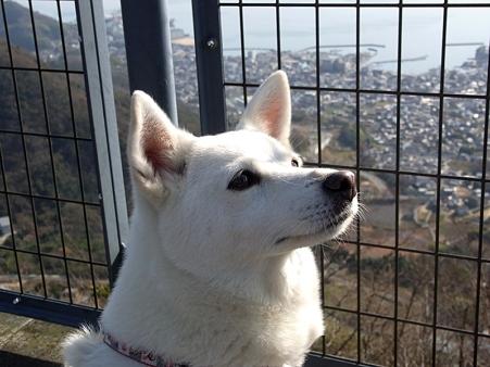 2010年正月帰省 野呂山からの眺め ワンコ02