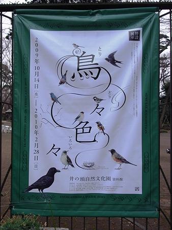 20100210 井の頭 鳥々色々