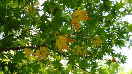 国営武蔵丘陵森林公園14