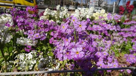 近所の花壇1