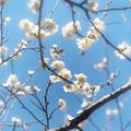 早春のかほり