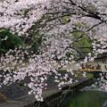 Photos: 善福寺川2016