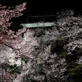 写真: 上田櫓夜桜1