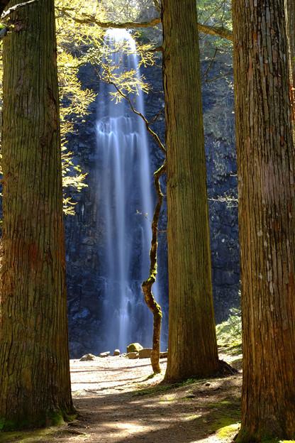 杉間の清涼