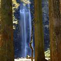 写真: 杉間の清涼