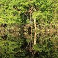 写真: 1616 アマゾン川@ブラジル