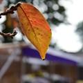 写真: 秋も深まり
