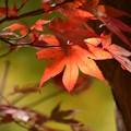 写真: 晩秋の日差し