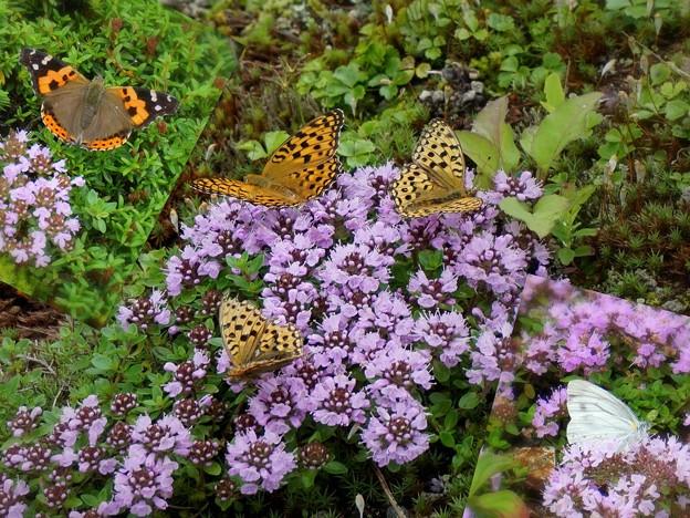 Photos: 蝶の楽園