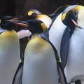 20160312 長崎ペンギン水族館19