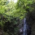檜原村 払沢の滝 2