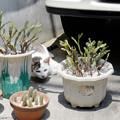 私は鉢植え。