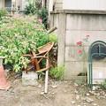 写真: 薔薇と椅子