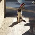 Photos: 改札の猫