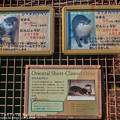 Photos: tobuzoo141018003