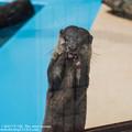 写真: oouchiyama1507120348