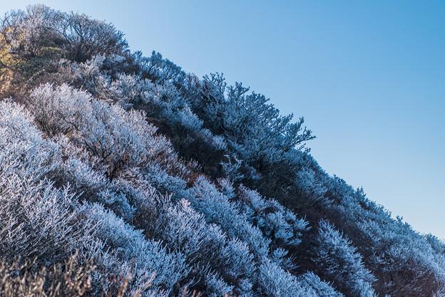 妙見岳の霧氷-2