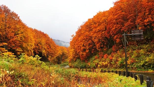 酸ヶ湯温泉の紅葉