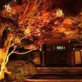 Photos: 永観堂ライトアップ3