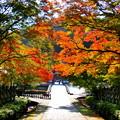 勝尾寺の紅葉 極彩美