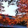 Photos: 勝尾寺の紅葉2