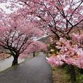 みなみの桜祭り