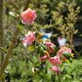Photos: 春ノ台