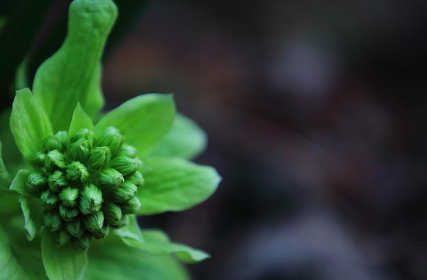 春を告げる味覚