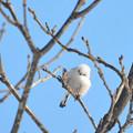 写真: 純白の天使