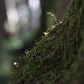 Photos: 森の小人たち
