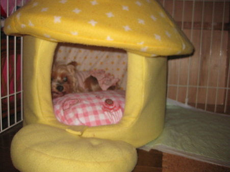 まりちゃんもきのこちゃんハウスが好き