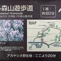 外森山遊歩道案内図