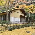 Photos: 茶室と銀杏の落葉