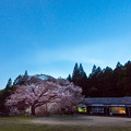 Photos: 旧久保山分校の桜