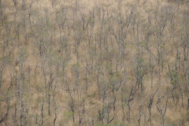 湿原が創る造形美