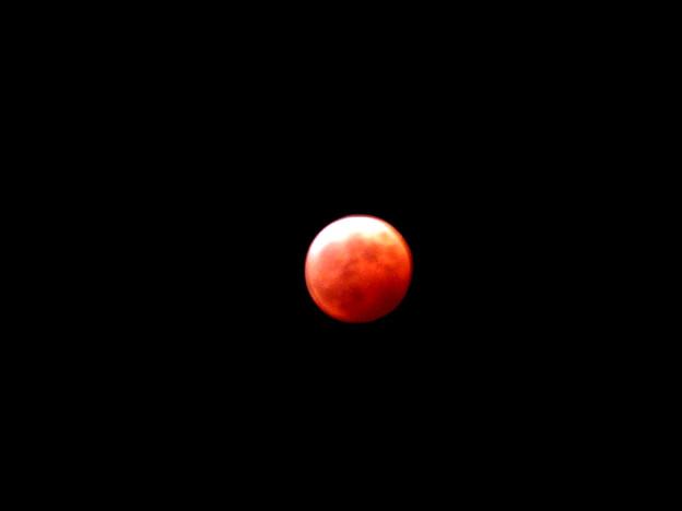 写真: IMG_8534 皆既月食2014.10.8
