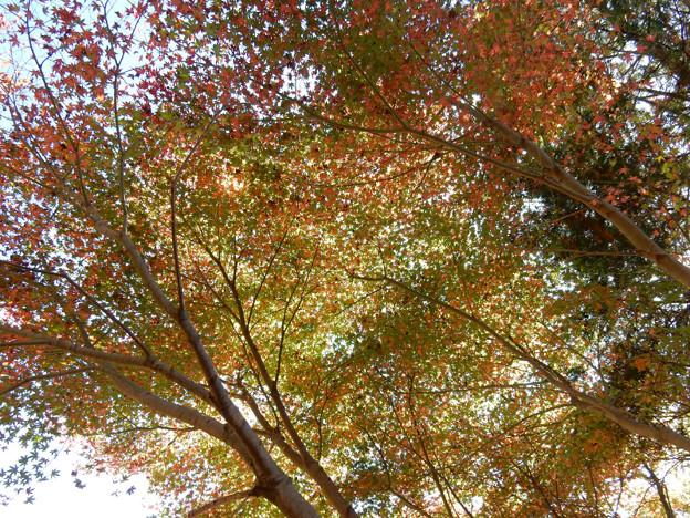 写真: DSCN0090 三河湖1