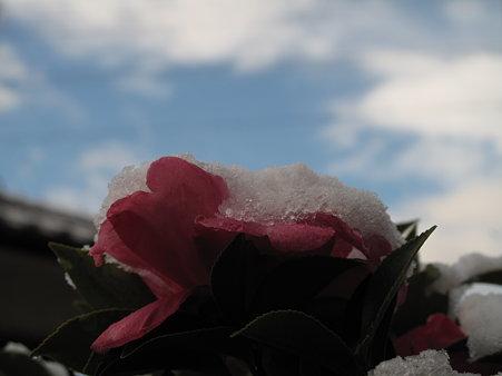 雪がやみ青空