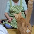 写真: 2010年8月7日のボクチン(6歳)