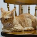 写真: 2010年8月10日の茶トラのボクチン(6歳)