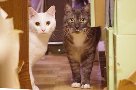 2014年8月15日のシロちゃん(1歳)とクロちゃん(2歳)