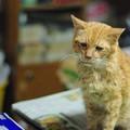写真: 2012年9月1日のボクチン(8歳)